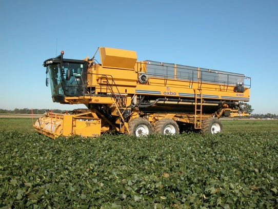 Lakeside Foods harvesting peas.