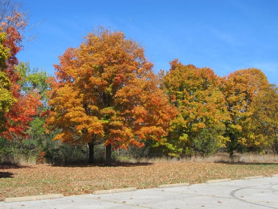 Colorful trees add to a fall hike along the trail.