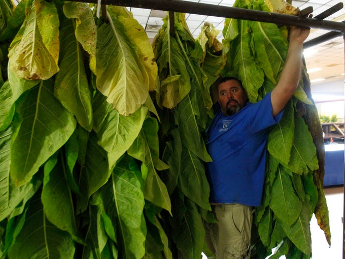 Brandon Bell hangs tobacco for the 4-H competition of the Kentucky State Fair at the Fair and Exposition Center in Louisville, Kentucky.       August 11, 2014