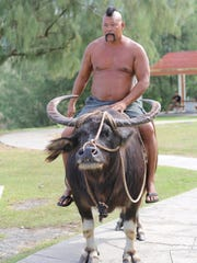 """A photo of """"Big John"""" Tedtaotao riding a carabao in"""