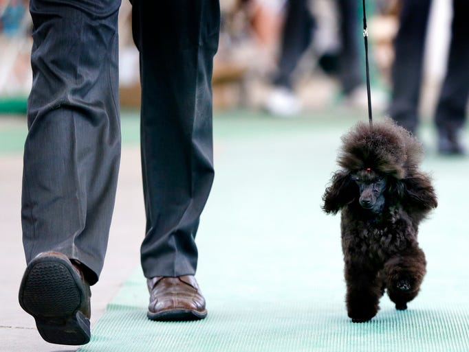 Dog Show At The State Fairgrounds