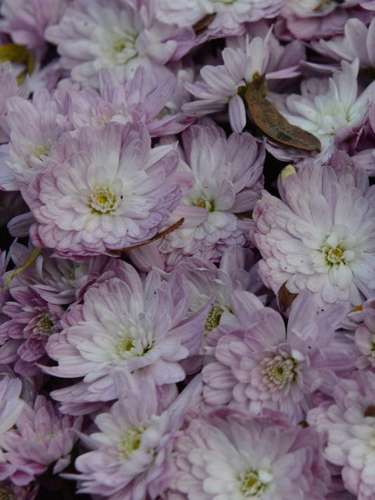 Schedel Arboritum