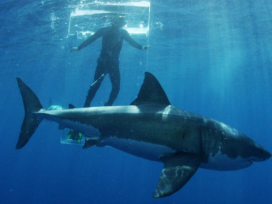 Discovery Channel great white shark shark researcher