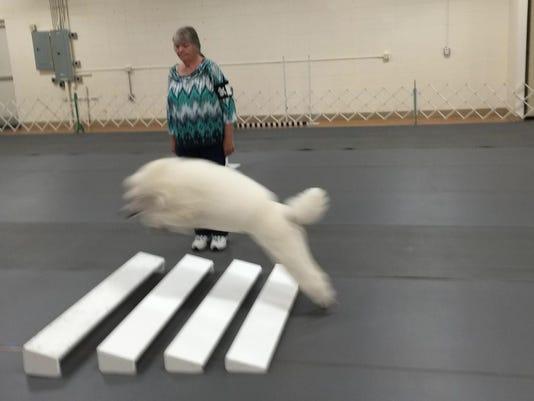 cws Dog Show03