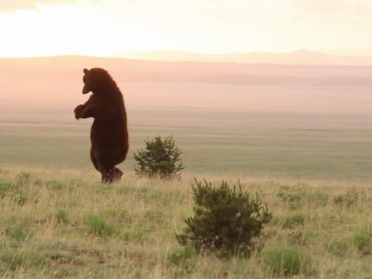 2-the bear's progress 1.jpg_20150303.jpg