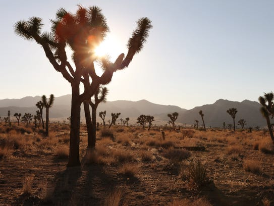 Joshua Tree National Park doesn't have any electric