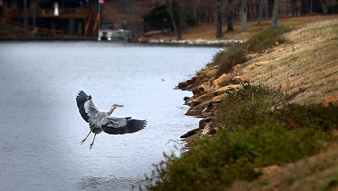 A heron wings over Garner Lake in Lakeland where the Lou-Jan Causeway passes over the dam that creates the lake. State inspectors identified erosion problems in the 71-foot-tall dam in 2011, but the structure has since been repaired.