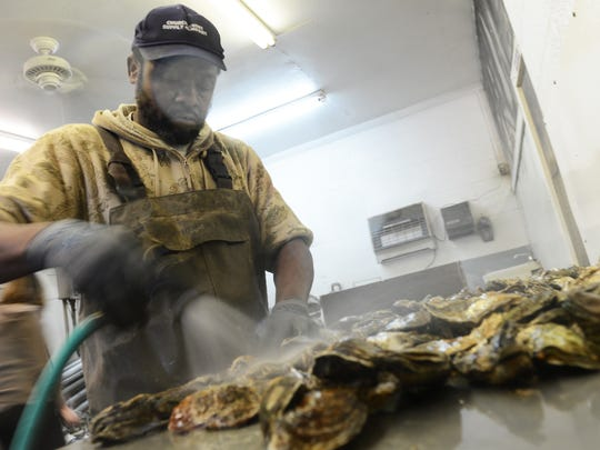 Johnny Wharton sprays down oysters as he cleans and separates them at Tom;s Cove Aqua Farms on Chincoteague, Va. on Tuesday, Jan. 26, 2016.
