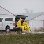 In this Jan. 17. 2016, photo, workers wearing contamination suits are driven to turkey houses on a farm along North Hickory Grove Road in Dubois, Ind. Frigid temperatures are hampering efforts to euthanize turkeys at several southwestern Indiana farms where a strain of bird flu was found last week, freezing the hoses used to spread a foam that suffocates the affected flocks, a spokeswoman for a state agency said Monday, Jan 18. (Sarah Ann Jump/The Herald via AP) MANDATORY CREDIT