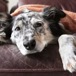 Prepare for 'Canine Holiday Letdown' (column)