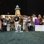 Jazzy and Bianca win top honors in Guernsey show at World Dairy Expo