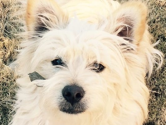 Pet Portraits: Kyser