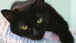Pipsqueak is one of 44 cats to benefit from the Asheville Cat Weirdos Emergency Fund.