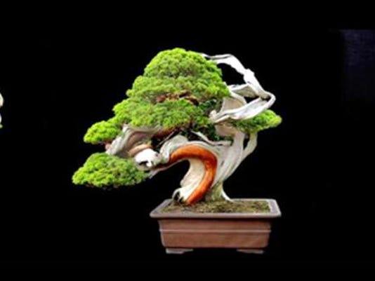 063016-cl-bonsai.jpg