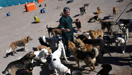 """In this picture taken on Sunday, March 5, 2017, veterinarian Hamid Ghahremanzadeh, chief of Aradkouh Stray Dogs Shelter plays with some of his charges on the outskirts of the capital Tehran, Iran. The shelter has been hired by the Tehran city government to take a new, more humane approach to deal with the burgeoning problem of stray dogs in the capital. It's a sign of changing attitudes among officials in a country where Islamic authorities long saw dogs as """"un-Islamic"""" and would at times confiscate them from people who kept them as pets."""