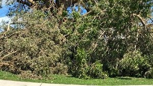 More than 5,100 cubic yards of branches, leaves and other yard waste from Hurricane Matthew was collected over the weekend, an Indian River County official said.