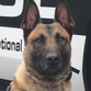 Oxnard police dog assists officers with man's arrest