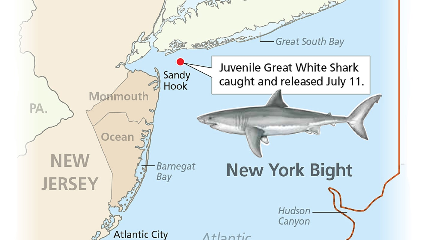 Evidence May Point To Great White Shark Nursery Off NJ - Great white shark range us map