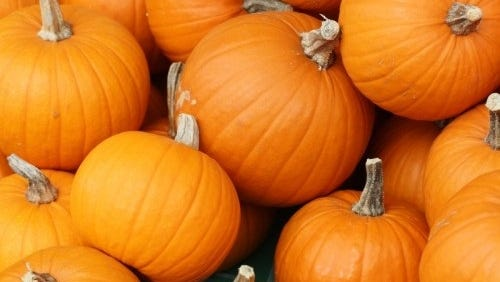 Get your quality pumpkins at the Palm City Pumpkin Patch and help the House of Hope.