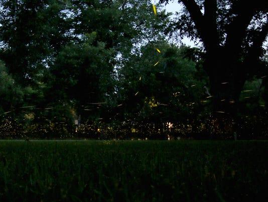 Speedway fireflies 1
