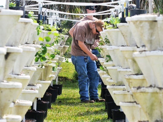 Workers check on about 100 hydroponic towers at an agribusiness center.