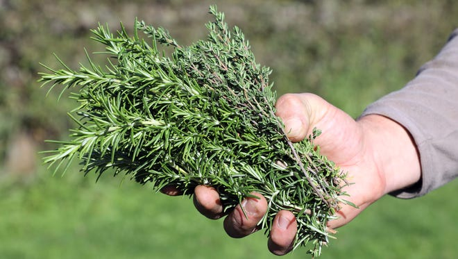 Some believe rosemary grows only where the woman of the house is master. It is also believed that rosemary worn about the body strengthens the memory and adds to the success of the wearer.