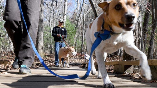 Eve Miller walks her dog, Jax, over a bridge as Josh Worsham wrangles Bubba and Luna on a trail in the Bent Creek Experimental Forest on Friday, Nov. 17, 2017. Forest Service law enforcement is ramping up enforcement of the leash law and writing tickets to the owners of non-leashed offenders.