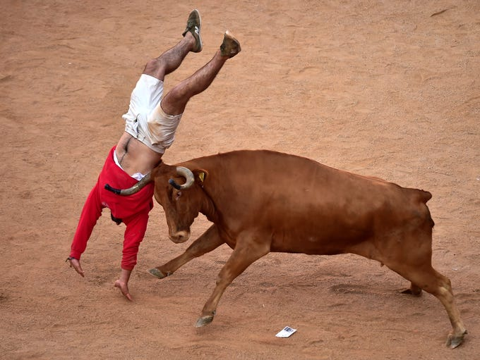 A reveller jumps over a heifer or young bull, following