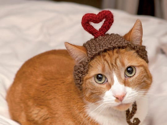 "I Heart You is featured in the book, ""Cats in Hats,"""