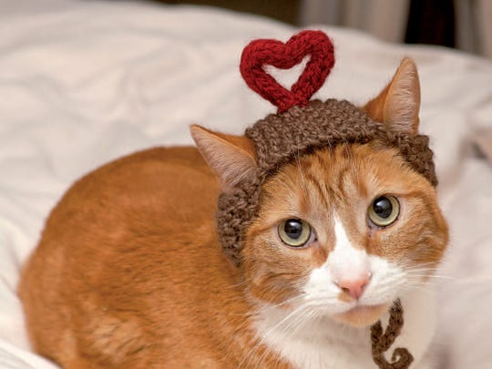 """I Heart You is featured in the book, """"Cats in Hats,"""" published by Running Press."""