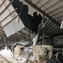 April blizzard's impact on area farms to linger: Barns damaged, cows lost