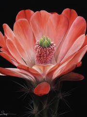 """""""Claret Cup"""" is an acrylic work by Penny Thomas Simpson, who also occasionally works in color pencils."""