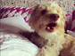 Lena Dunham snapped this cute shot of her puppy while the pair were lounging in bed.