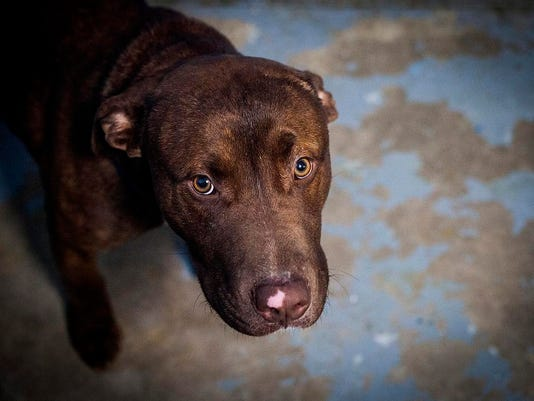 636280180813585393-animal-shelter-sweet-chocolate-pit.jpg
