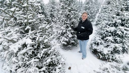 Jenny Howell stands among snow-covered Christmas trees on her family-run Howell Tree Farm, Wednesday, Nov. 26, 2014, in Cumming, Iowa. After several tough years, the nation's Christmas-tree growers are happy to see higher prices, but customers shouldn't worry too much. (AP Photo/Charlie Neibergall)