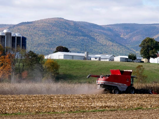 A combine harvests corn from a field along Patton Farm Road in Stuarts Draft on Oct. 17, 2014.