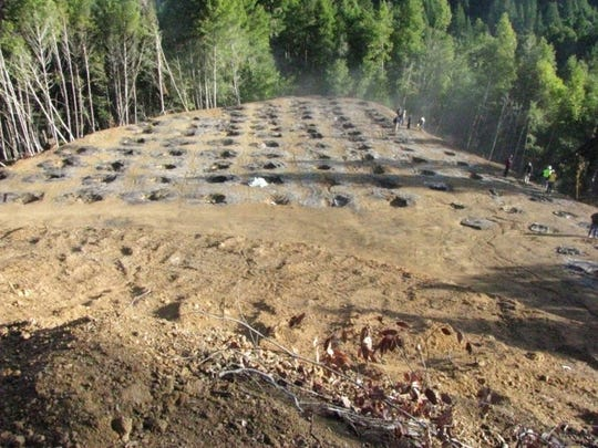 In this undated photo provided by the California Department of Fish and Wildlife, are the remains of a marijuana farm on private land in the Eel River watershed near Willits, Calif. However many of California's pot growers come off the black market when recreational marijuana becomes legal here next month, legalization will bring environmental rules and regulators to an industry notorious for bulldozing forest, draining streams, and strewing banned poisons. Plot for plot, according to a study published this year, illegal marijuana cultivation does more damage than commercial logging in remote forests of northern California, the hub for the U.S. cannabis industry.