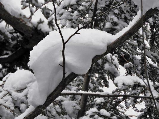 636505942295294432-snow-animal-2-1024x769-.jpg