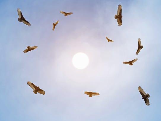 Buzzards help keep the earth clean.