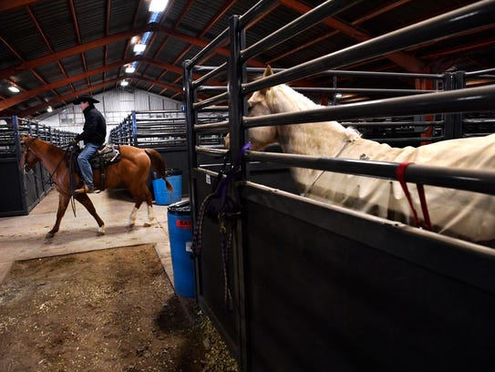 A rider passes a horse in one of the new stalls at