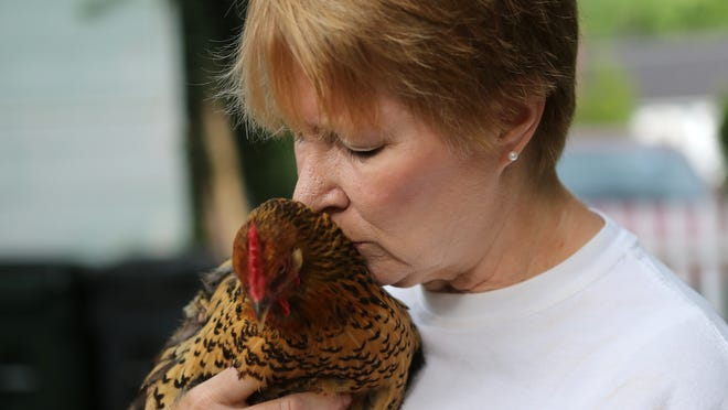 Jenny Durbin holds one of the chickens she keeps at her home in Silverton. She's had the birds on her property since 2009, but now must relocate them because of a village ordinance.