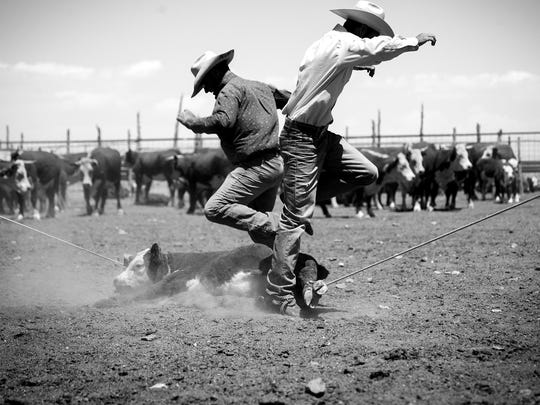 It takes two cowboys to lasso and bring down a 200-pound calf for branding at Twin Springs Ranch in Nye County.