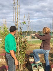 Jo Sigrid Fain and Trevor Hylton, UF/IFAS, discussing pear tree pruning at Montford Middle School.