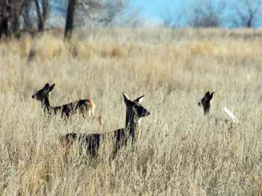 WSF-DeerSeason-11-27.jpg