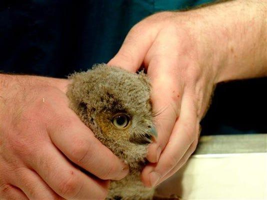 Baby.Owl