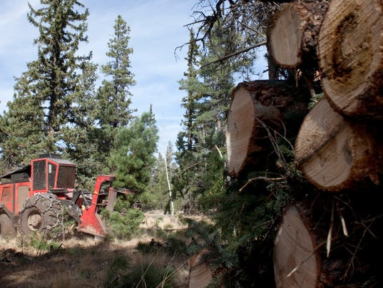 climate forest thinning