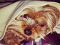 Rossum also recently dropped this adorable photo of her Yorkshire Terrier, Cinnamon, onto her Instagram page.