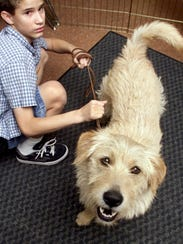 A dog from a program where kids work with abandoned