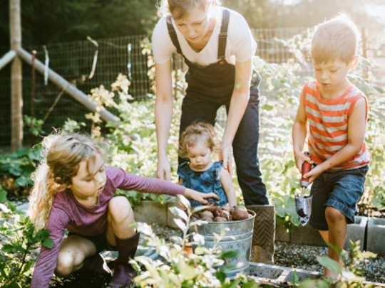 Kids can help parents to plant their own garden in the backyard.