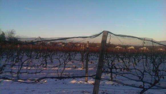ice wine vineyard